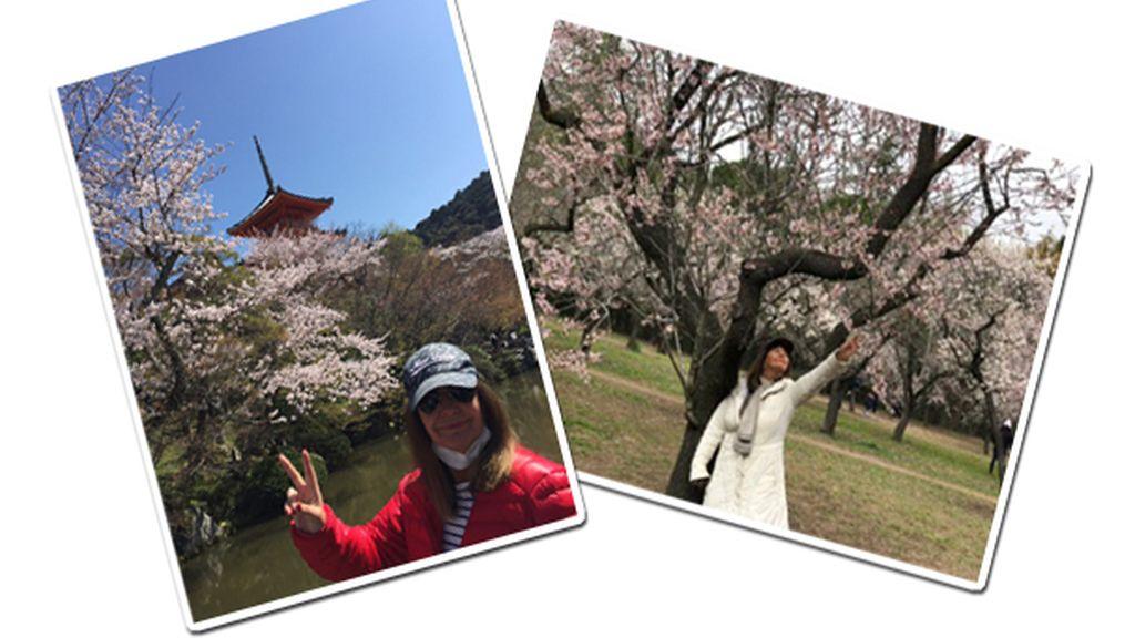 Sakura EG