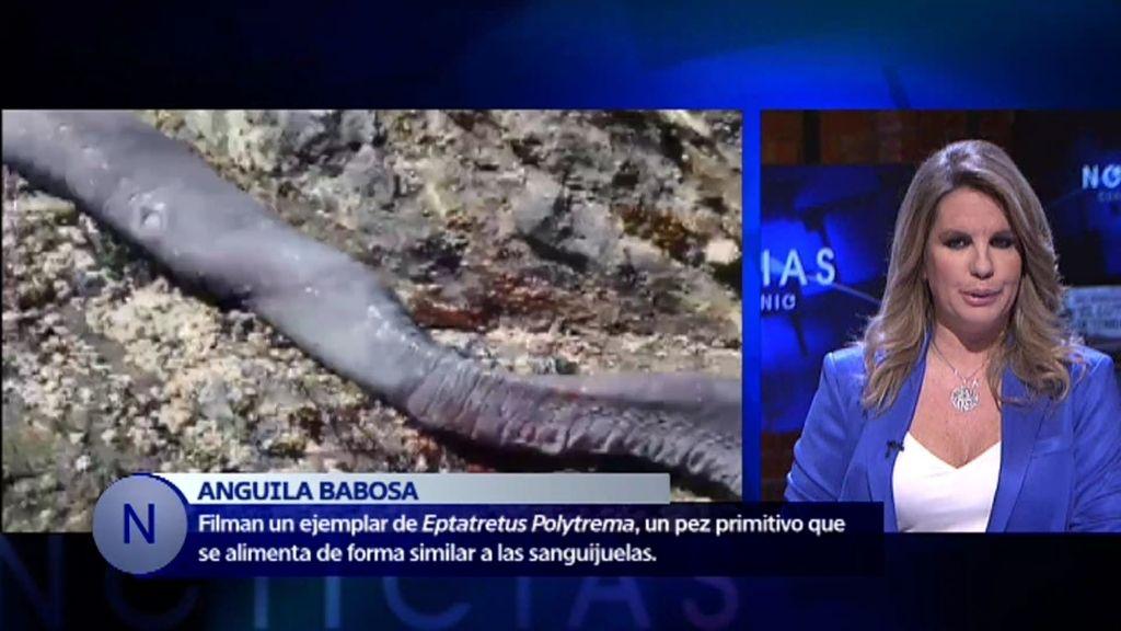 Noticias del misterio: Encuentran un extraño animal que se alimenta de cadáveres