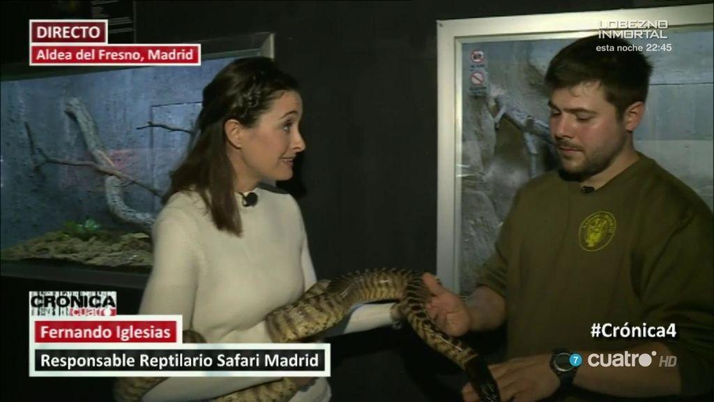 Peligrosas 'mascotas': ingresado en Madrid tras el ataque de una serpiente de cascabel