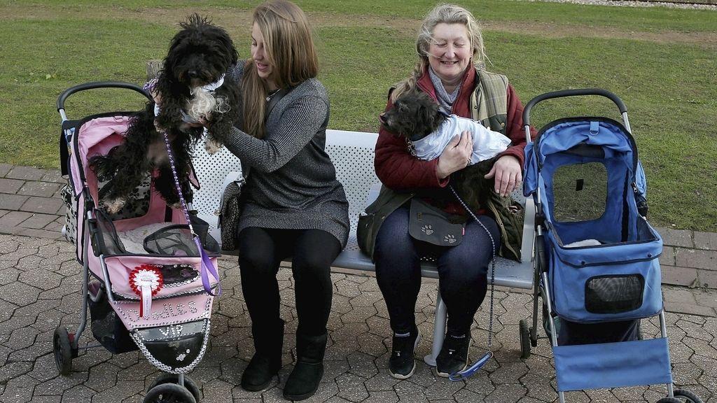Feria Canina en Reino Unido