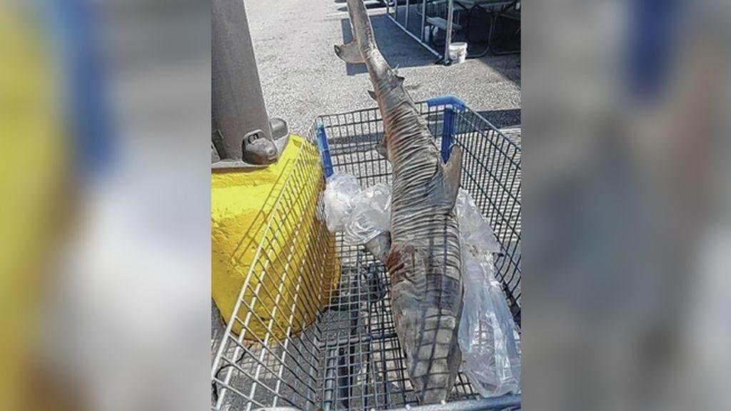 Un enorme tiburón muerto aparece en el carro de la compra de un supermercado