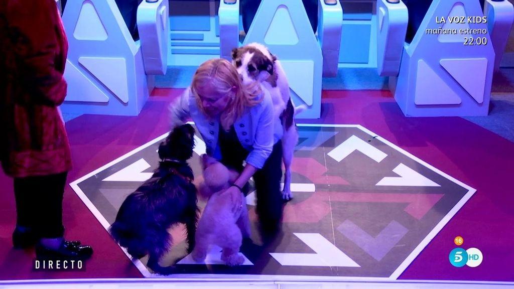 El 'apasionado' reencuentro de Emma con sus perros