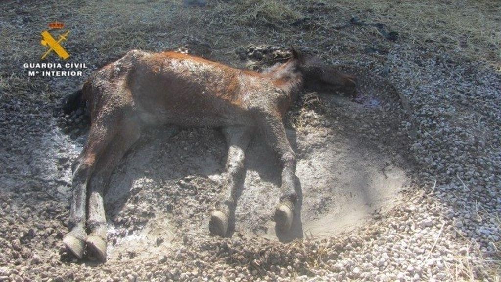 La Guardia Civil investiga a dos personas por maltrato animal en una finca de Echauri