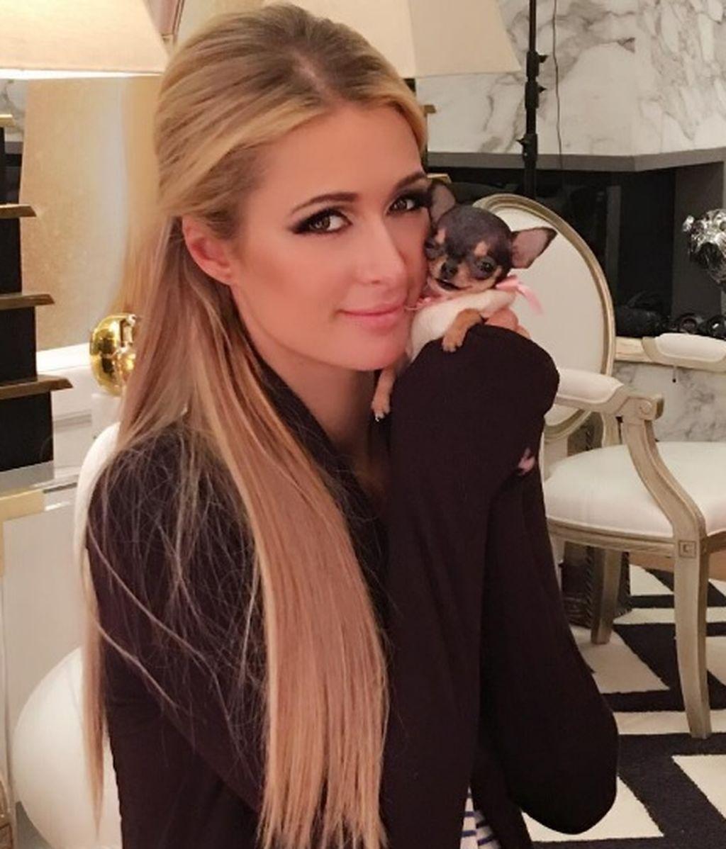 Ha costado 8.000 dólares y mide como tu mano: el nuevo chihuahua de Paris Hilton