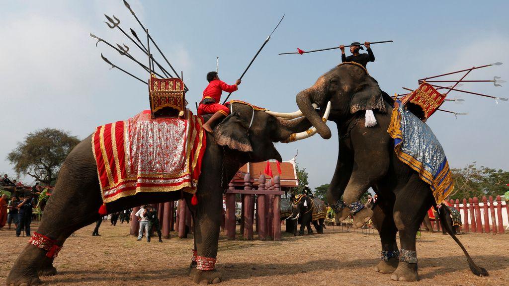 El día del elefante en Tailandia