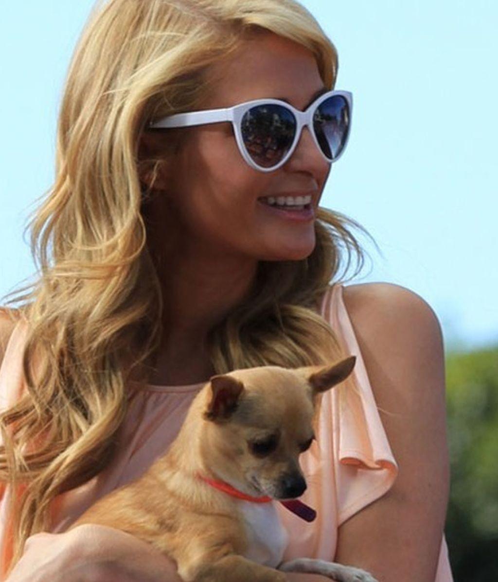 Paris Hilton, 'Una rubia muy legal' pero sin chihuahua: su perro Tinkerbell ha muerto