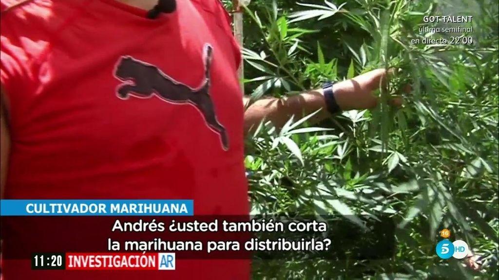 'AR' entra en las plantaciones clandestinas de marihuana en Granada