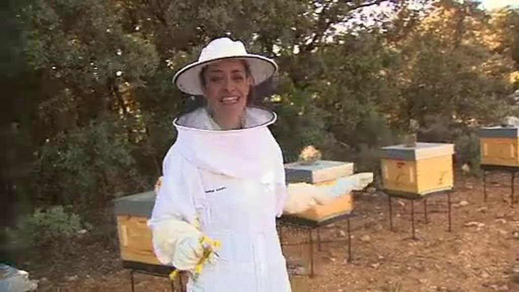 ¿Qué podemos hacer si nos ataca un enjambre de abejas?