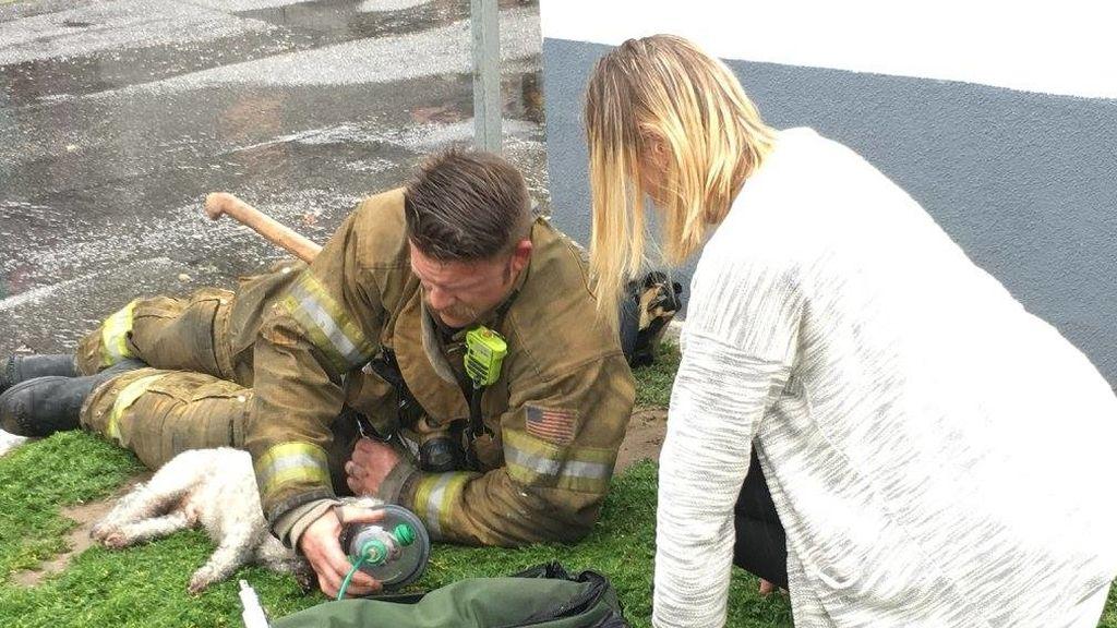 Unos bomberos acuden a sofocar un incendio y acaban resucitando a un perro