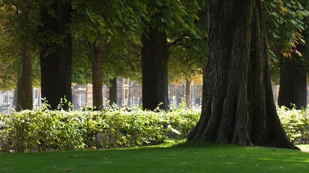 Prisión para el tío de la joven hallada atada a un árbol de un parque público