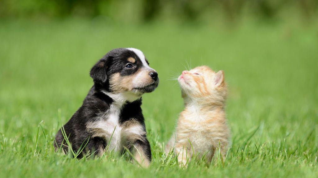 Gatos o perros, ¿quién es el mejor amigo del hombre?