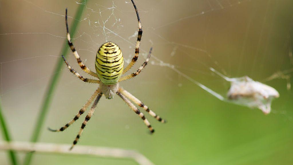 Las arañas podrían comernos a todos y... se quedarían con hambre