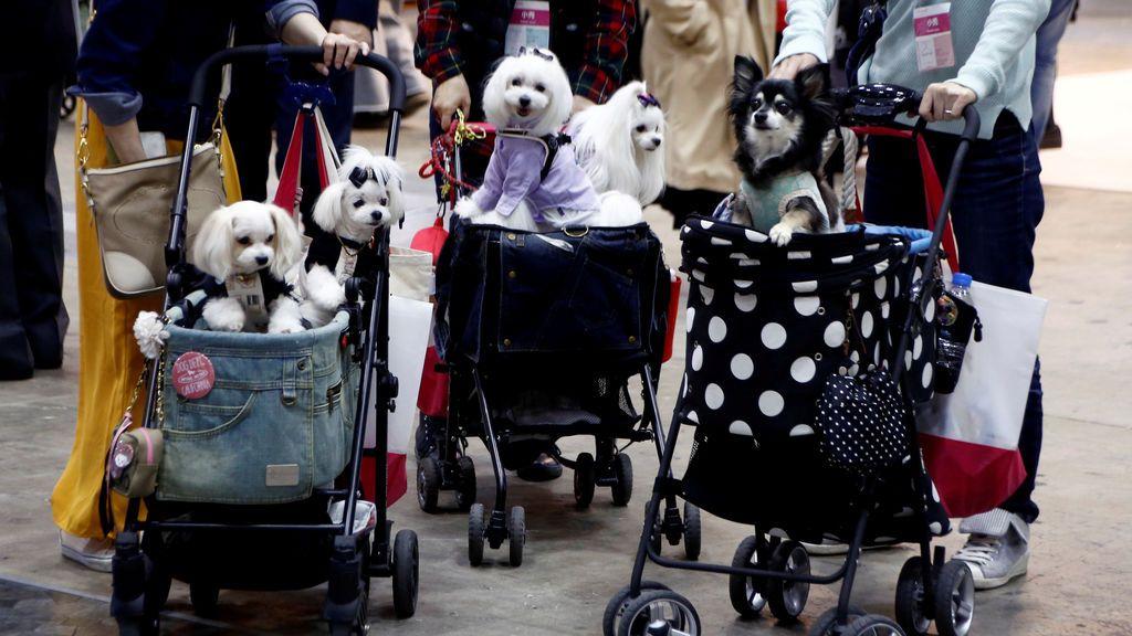 Feria de mascotas en Tokio