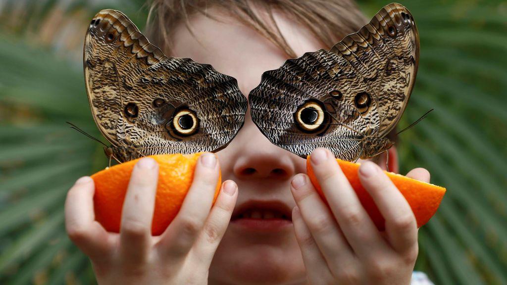 Exposición sobre mariposas en Londres
