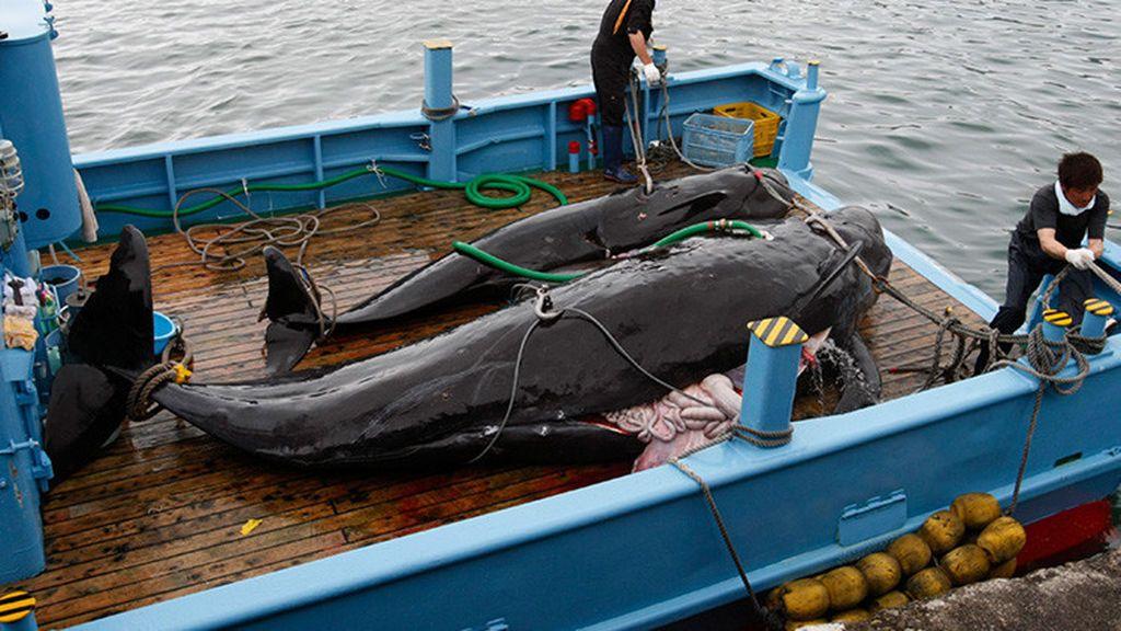 Japón mata a 333 ballenas
