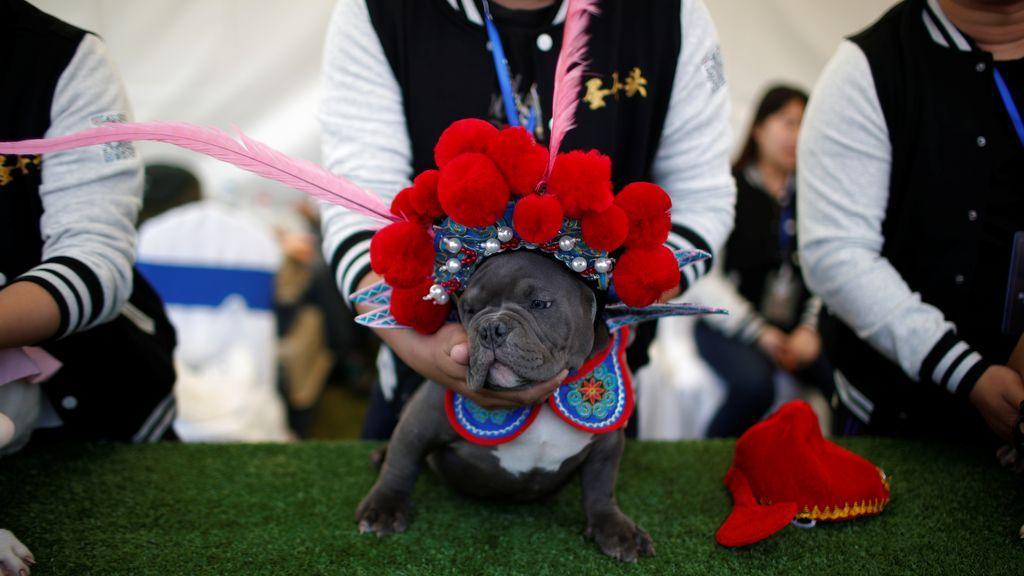 Show canino en China