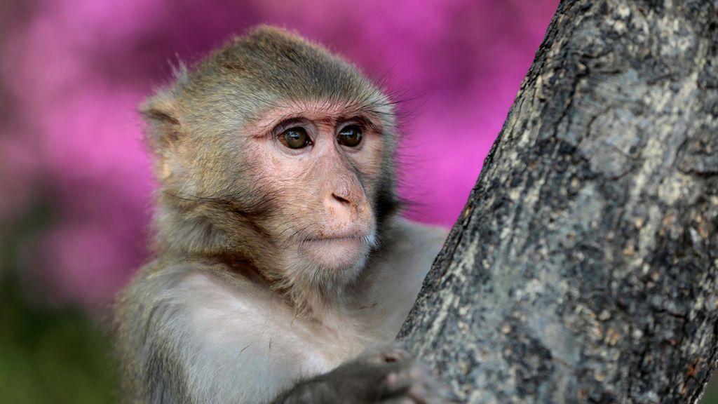 Un mono observa a los turistas en Islamabad