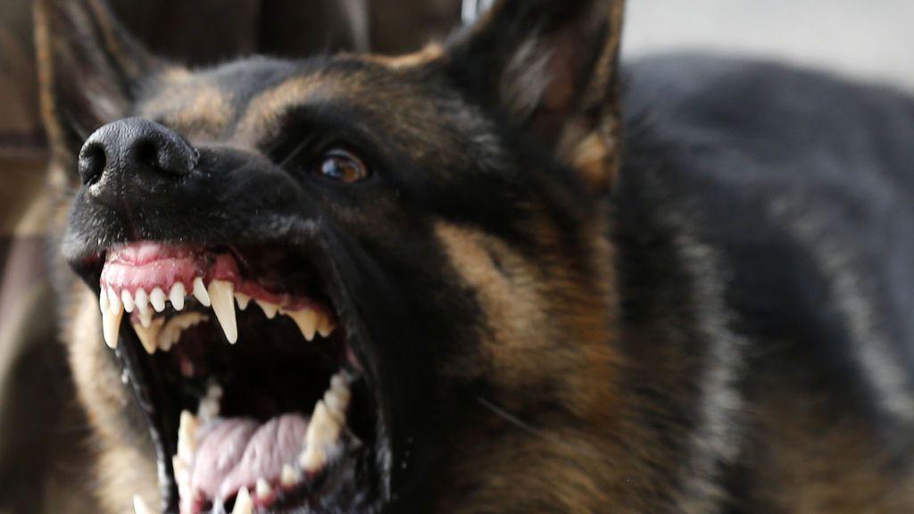 Un perro salva a los invitados de una boda de un ataque suicida con bomba