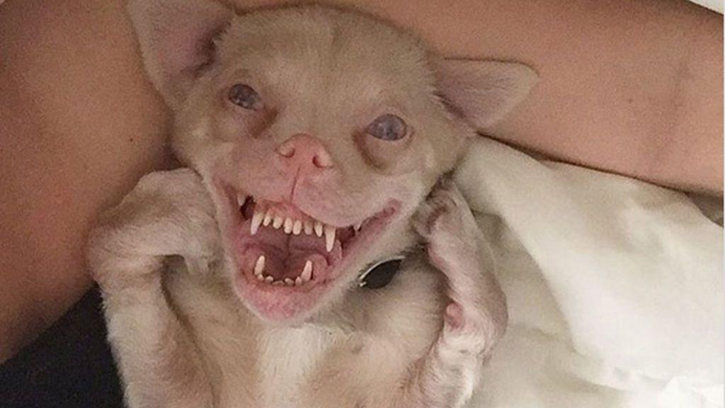 Éste es el perro con apariencia de murciélago que se ha hecho famoso en Instagram