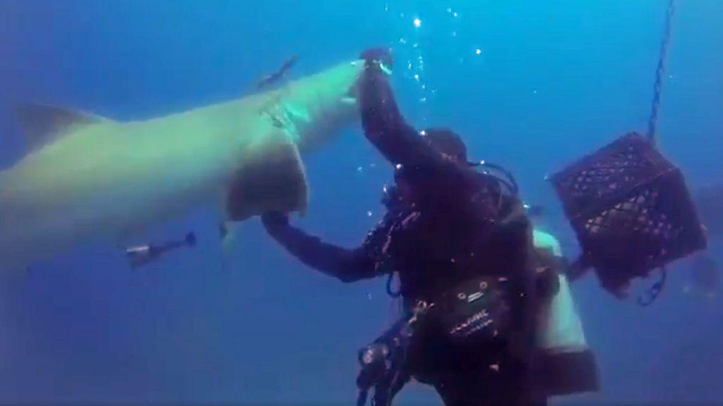 ¡El susto de su vida! Un tiburón herido se le acerca mientras bucea para… que le quite un anzuelo del vientre