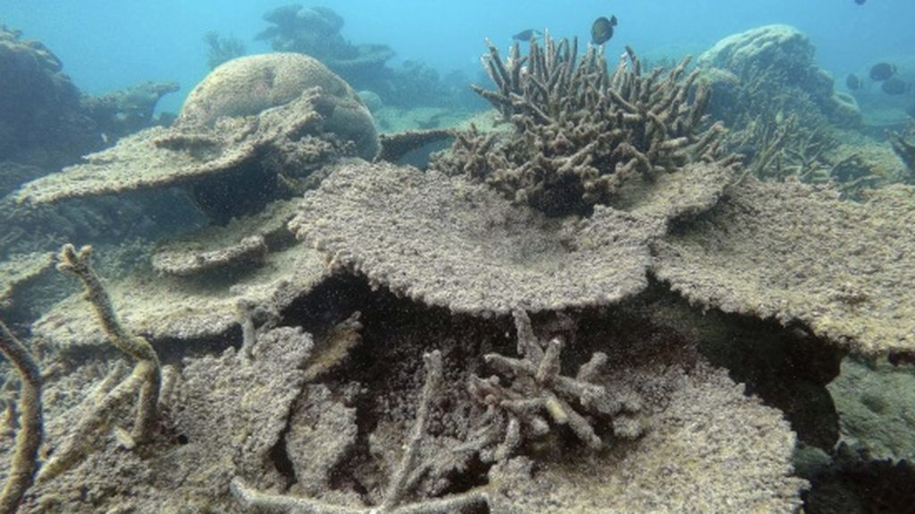 Dos tercios de la Gran Barrera de Coral australiana, blanqueadas por el calentamiento global