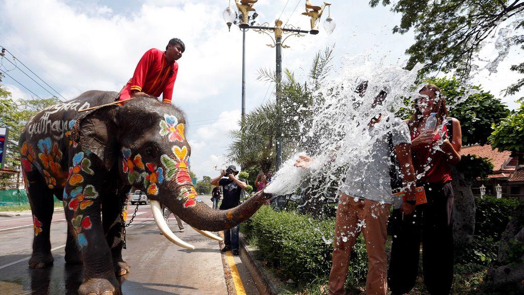 Elefantes de celebración en Tailandia