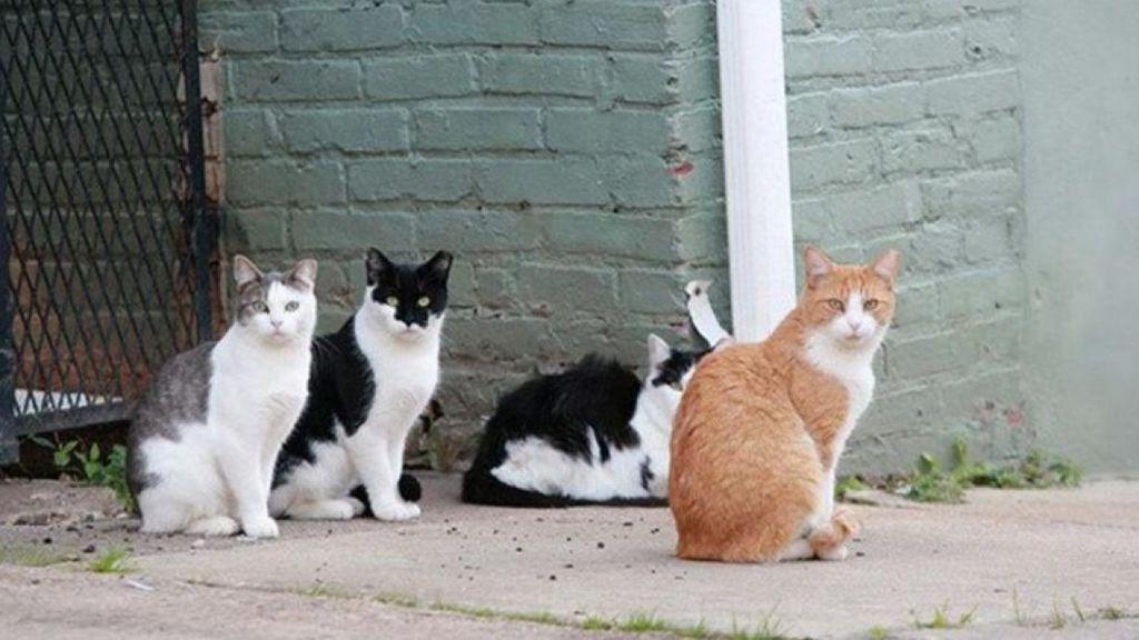 ¿Nueve meses de cárcel por matar a un gato callejero?
