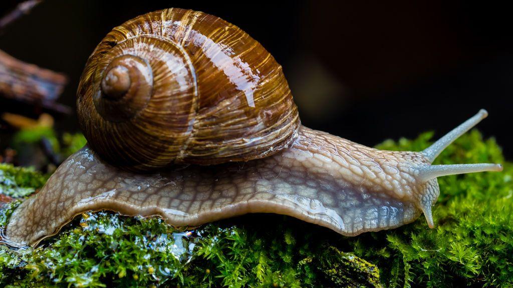 Hawái alerta sobre el peligro de muerte por contacto directo con moluscos