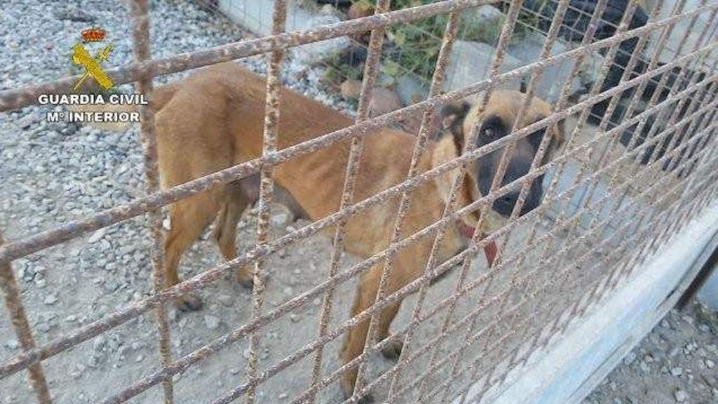 Detenida una persona en El Ejido (Almería) por el abandono y maltrato de 19 perros