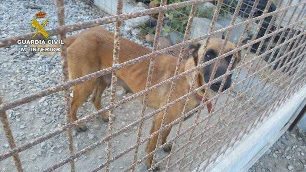 Detenida una persona en El Ejido (Almería) por el abandono y maltrato de 19 perros de distintas razas