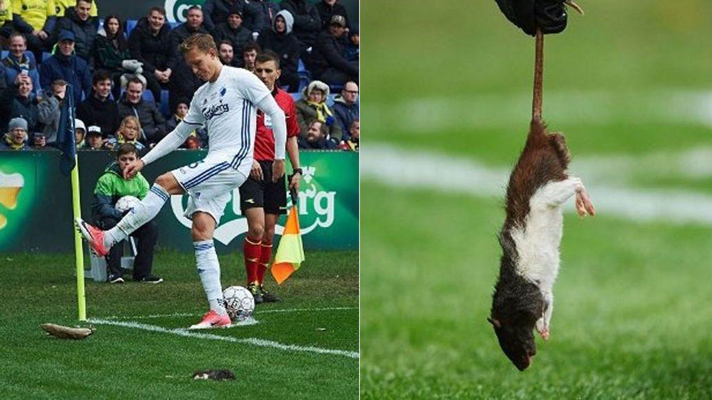 ¡Asqueroso! Ultras del Brondby lanzan ratas muertas al rival en el derbi de Copenhague