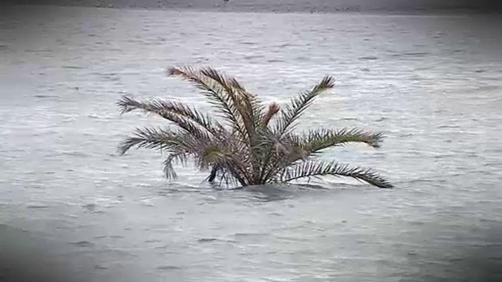 Palmeras bajo el agua y un molino eólico en el suelo por el temporal de viento