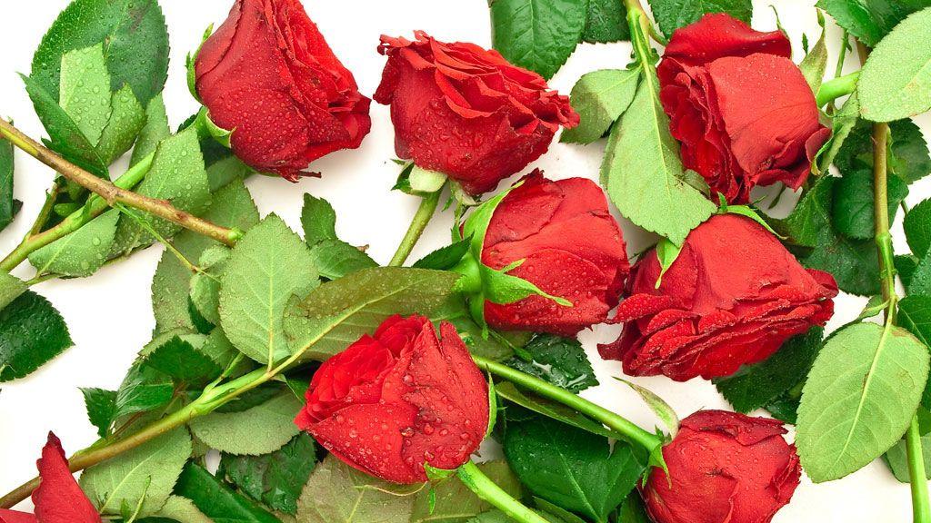 Siete consejos para conservar fresca la rosa de Sant Jordi