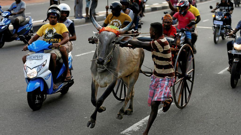 Colombo celebra el Sinhala, el año nuevo indú y tamil