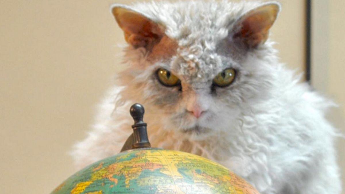 El gato que cualquier villano querría tener