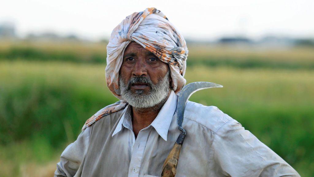 Cosecha de trigo en Islamabad