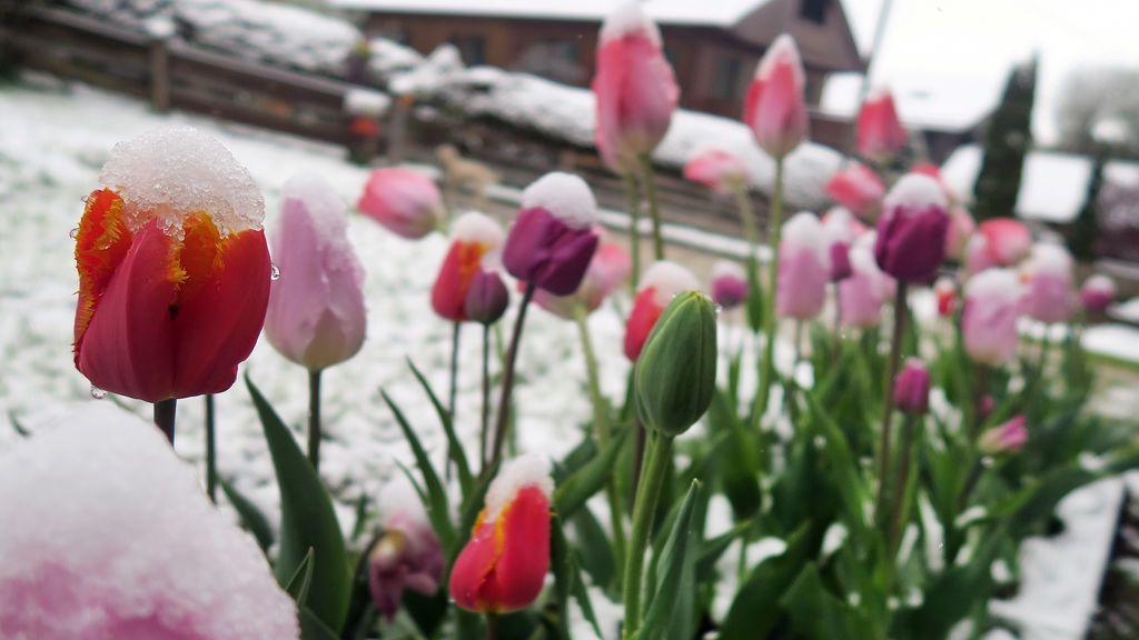 Nieva en Alemania