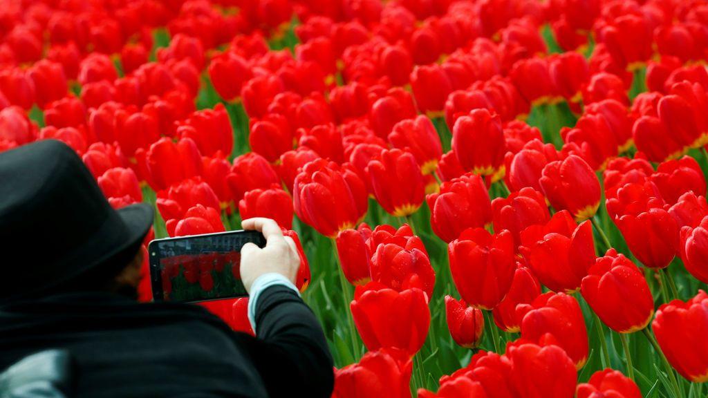 Tulipanes en Nueva York