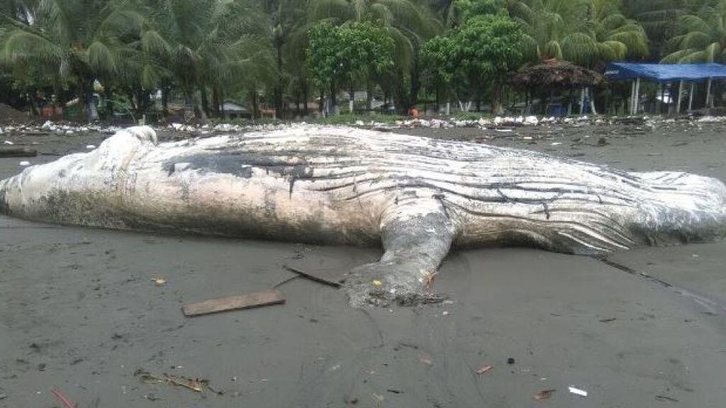Aparece una ballena jorobada muerta en una playa de Colombia