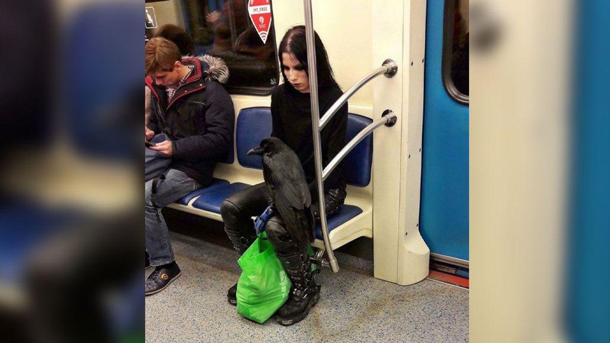 Quizás debas mirar la foto dos veces para ver qué mascota llevaba en el metro