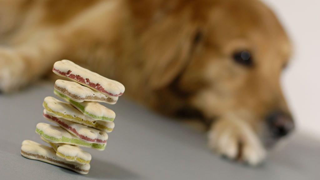 Los 12 alimentos más peligrosos para los perros
