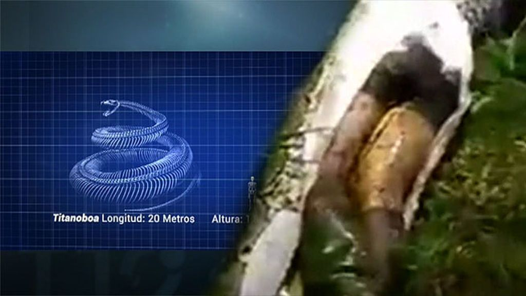 Una espeluznante serpiente, de más de veinte metros, se traga a sus víctimas vivas 🐍