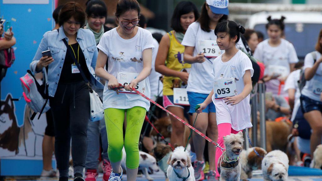 ¡Ellos también hacen deporte! Mini-maratón de perros en Bangkok