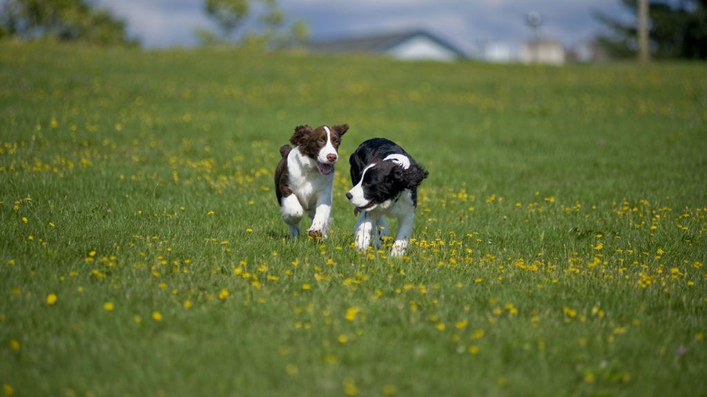 """El Senado aprueba """"sin reservas"""" la prohibición de cortar el rabo a los perros"""