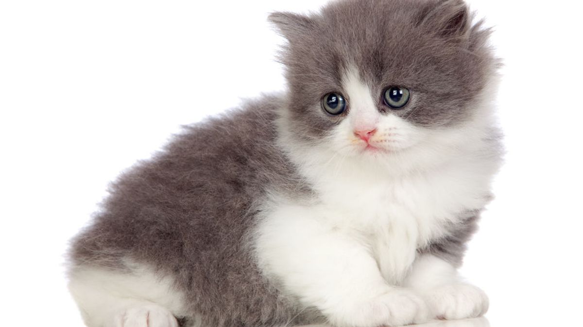 Los peligros detrás de abrazar a los gatos, según los científicos