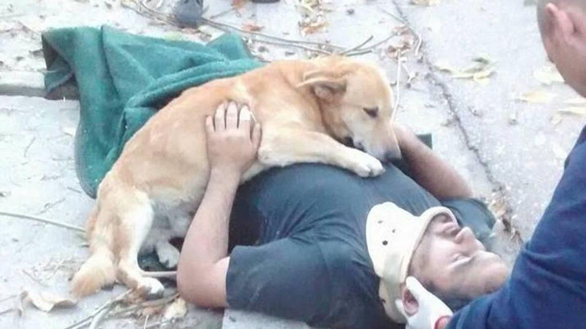 Un perro se niega a abandonar a su dueño inconsciente mientras llega la ambulancia