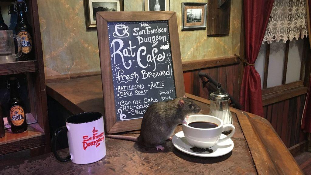 Abren un café donde podrás tomar algo... mientras ratas vivas corretean a tu alrededor