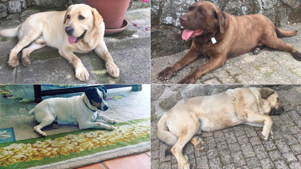 Perros Ana Rosa
