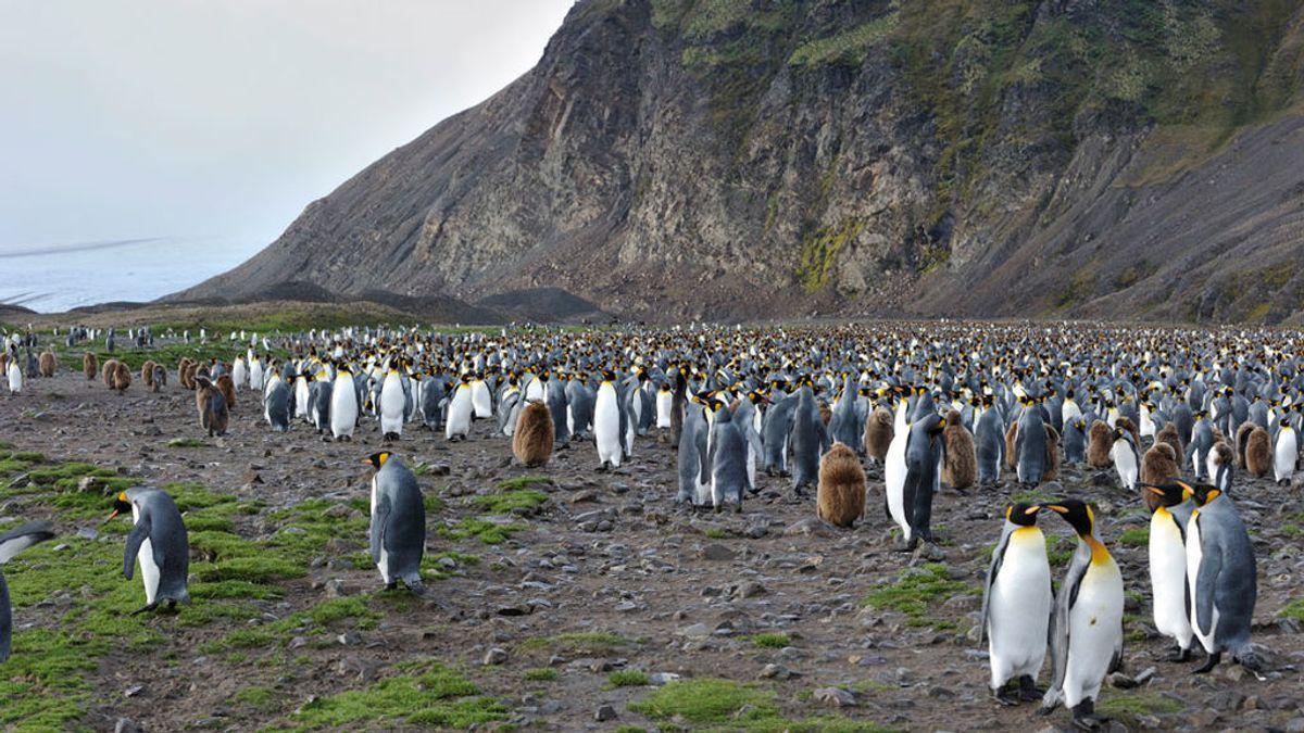 La Antártida se está volviendo verde por el cambio climático
