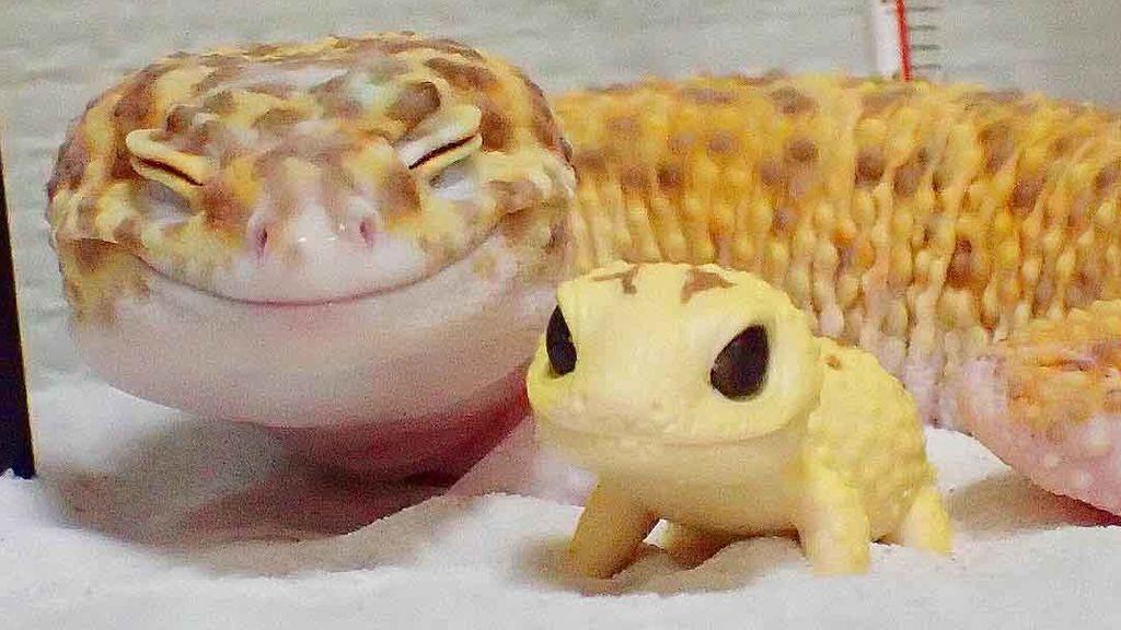 La sonrisa de esta salamanquesa revoluciona la Red
